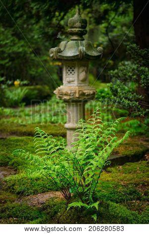 Green fern and lantern in Japanese garden, Park Clingendael, The Hague, Netherlands