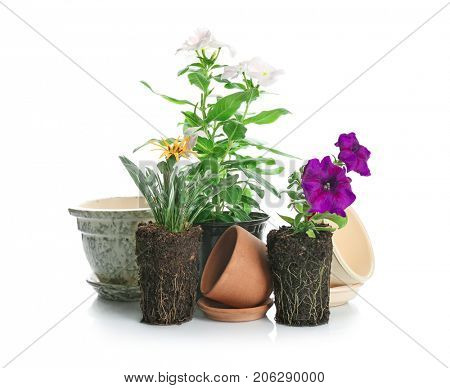 Blooming plants and different flowerpots on white background. Gardening concept