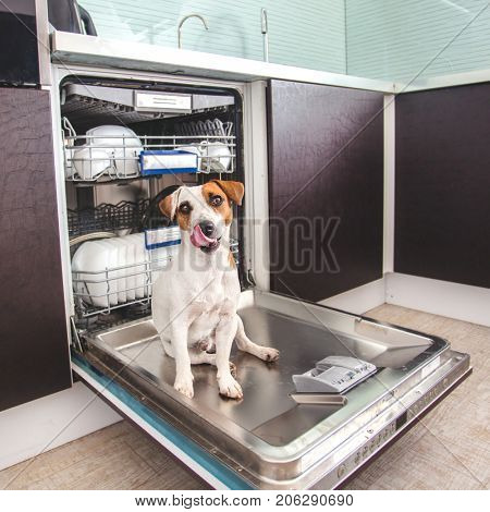 Dog licking dishes in the dishwasher. Fun pet. Humour