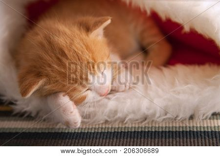 small ginger kitten sleep in the christmas hat in home.
