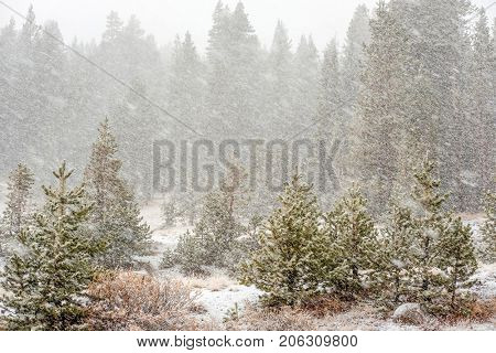Snowstorm beginning in Yosemite National Park, Tioga Pass. California, USA.