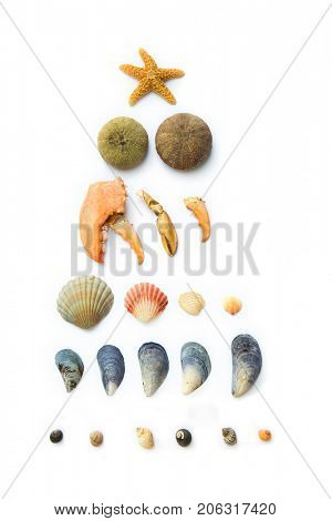 Collection of seashells, seastar, snails and urchin all on white background