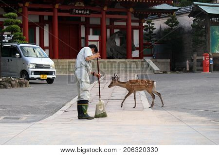 A Japanese Staff (probably A Janitor?) Cleaning The Floor In Front Of A Temple In Miyajima Island. H