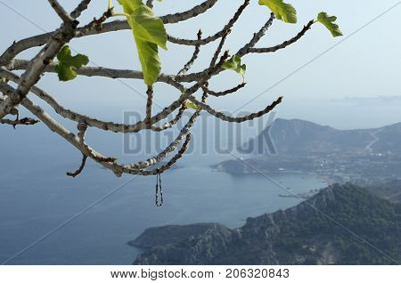 Bracelets dedicated to the virgin Mary Tsampika and left on the branches (Rhodes, Greece)