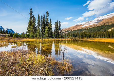 The concept of ecotourism. Pine trees reflected in smooth water. Sunny day. Waterlogged valley in the snowy Rocky Mountains
