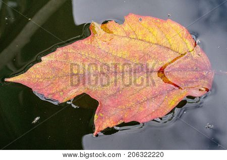 autumn leaves in water, leaves in an autumn brook