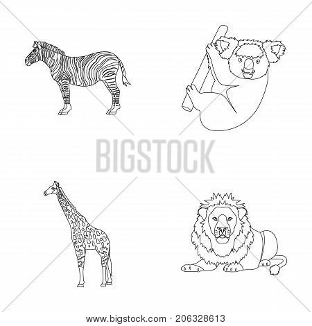 African zebra, animal koala, giraffe, wild predator, lion. Wild animals set collection icons in outline style vector symbol stock illustration .