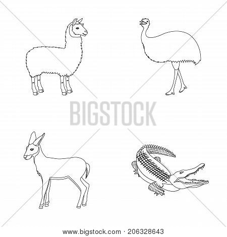 lama, ostrich emu, young antelope, animal crocodile. Wild animal, bird, reptile set collection icons in outline style vector symbol stock illustration .