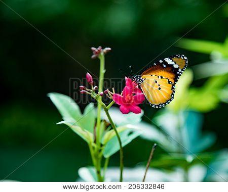 butterfly flower beautifu colorful nature green garden