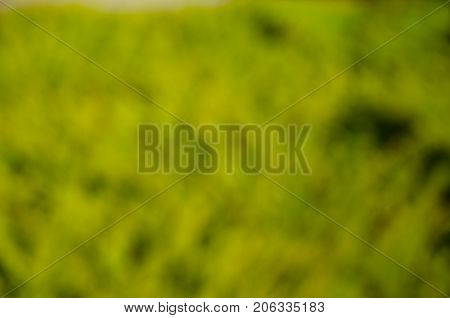 Abstract and blured out of focus green background