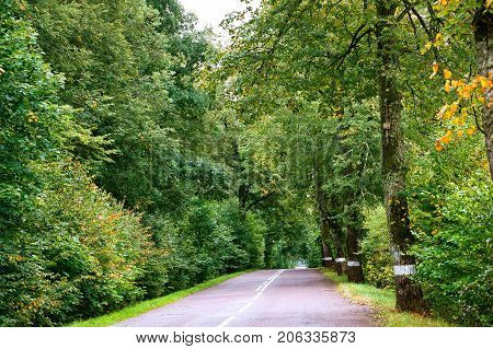 village winding secondary road in the village and the trees on the edges