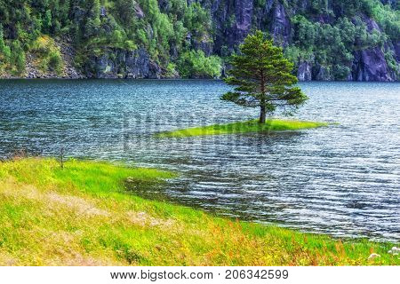 Small island with alone tree