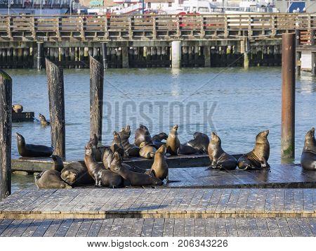 Lots Of Sea Lion