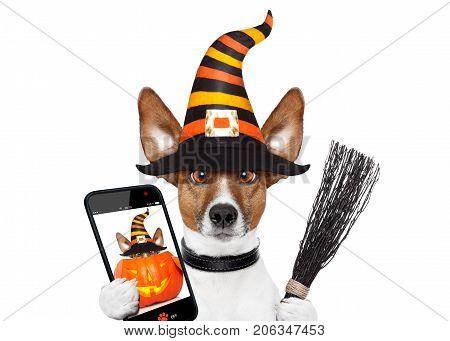 Halloween Pumpkin Witch Dog Selfie