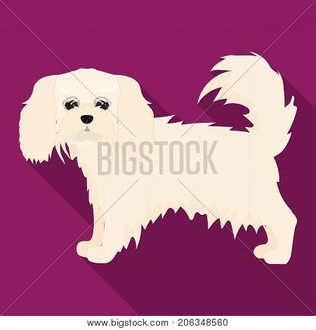 Spaniel, single icon in flat style.Spaniel vector symbol stock illustration .