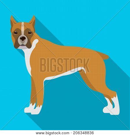 Boxer, single icon in flat style.Boxer, vector symbol stock illustration .