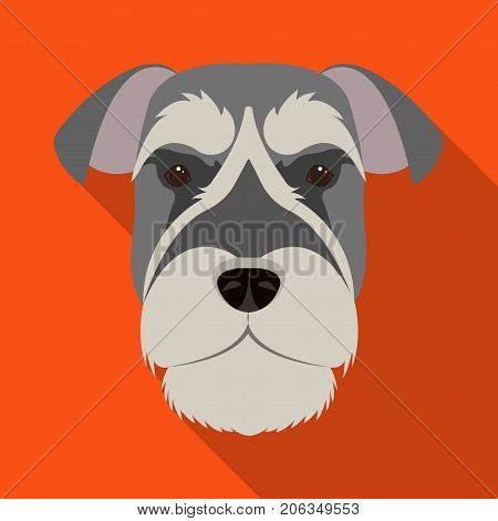 A breed of a dog, a risen schnauzer.Risen Schnauzer Muzzle single icon in flat style vector symbol stock illustration .