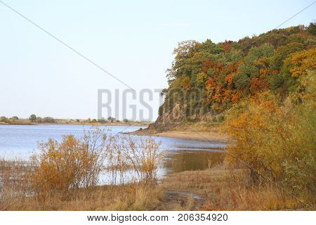 Cliff with forest over the river / Riverbank, overgrown with reeds and willow trees / Autumn landscape / Autumn forest on a cliff
