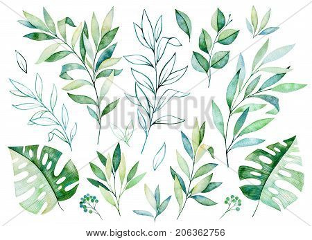 Watercolor greens collection.Texture with greens,branch,leaves,tropical leaves, foliage.