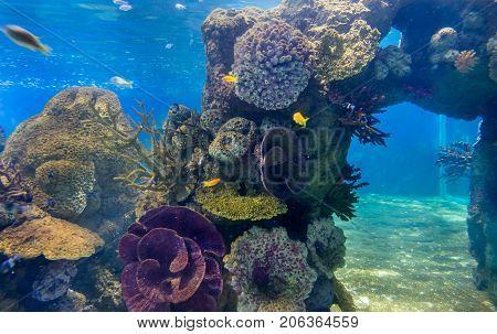 Plastic colorful decorative corals and fishes in new Israel aquarium