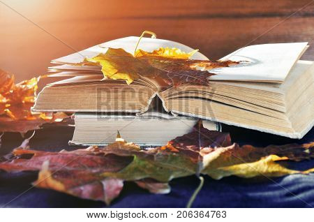 Fall still life - old books among the fall leaves and bright sunlight. Focus at the book's spine. Fall background with maple fall leaves. Fall still life in retro tones. Fall composition