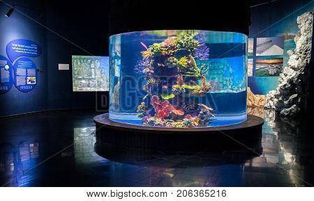 Fishes And Plastic Colorful Decorative Corals In New Israel Aquarium