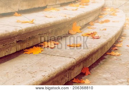 Fall leaves on the stone stairs. Fall background with fallen dry orange maple fall leaves. Fall leaves in the park, fall nature background. Orange fall maple leaves. Natural fall background