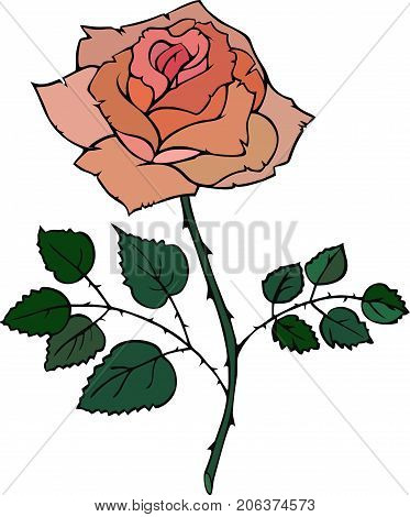 Vector rose red bud and green leaves isolated on white background