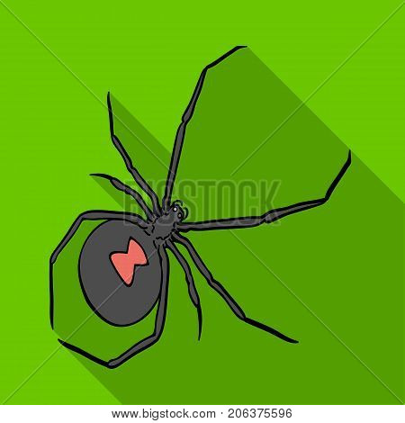 An arthropod bug is an insect.A spider, a predatory insect single icon in flat style vector symbol stock isometric illustration .