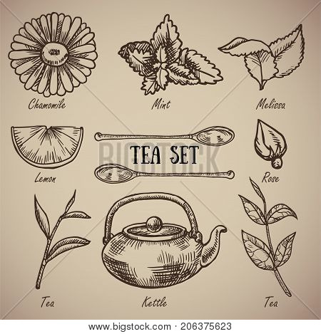 Engraving a tea set: chamomile lemon balm mint lemon spoons rose tea leaves kettle. A vintage set of a tea drunkard. Engraving menu for the restaurant. Vector illustration. EPS 10