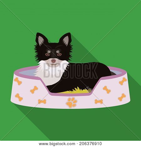 Lounger for a pet, a sleeping place. Dog, care of a pet single icon in flat style vector symbol stock illustration .