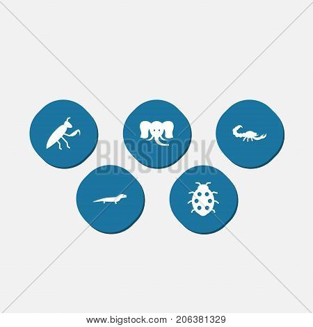 Collection Of Poisonous, Beetle, Trunked Animal And Other Elements.  Set Of 5 Zoo Icons Set.