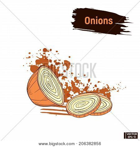 Onions Colored Sketch Hand Drawing