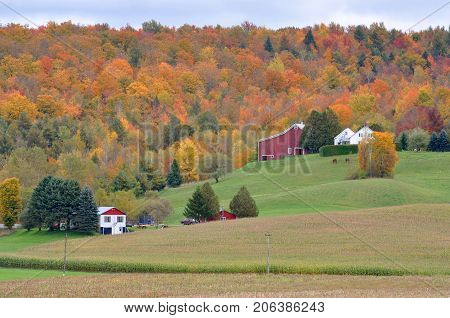 Vermont Fall Foliage with Barn and Houses, Jeffersonville, Vermont, USA.