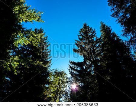 The treetops with blue background and sunlight.