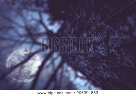 Silhouettes Of Dry Trees With Night Sky And Full Moon. Serenity Nature Background