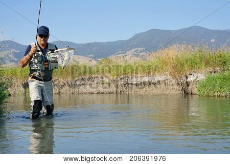 Fly-fisherman catching brown trout in North American river