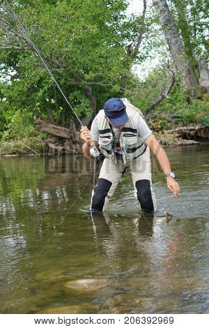 Fly fisherman catching brown trout in river