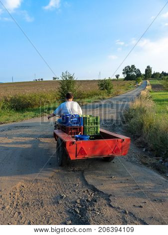 Man leaving his field with crop on his small tractor.
