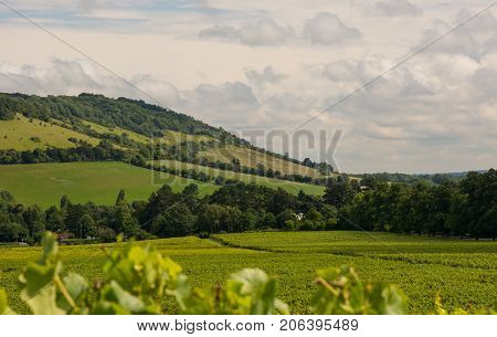 View to Box Hill from valley below. Dorking Surrey England. With vineyard in foreground.