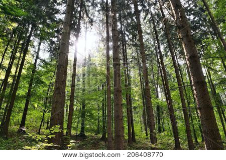 Sunshine In Forest On Way To Bucina View At Beginning Of Autumn In West Bohemia