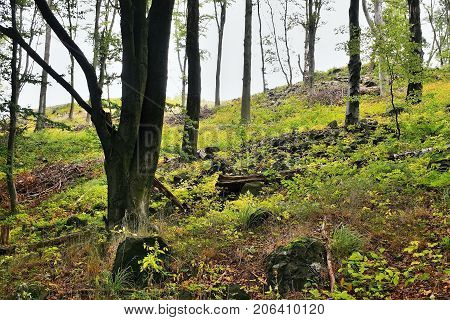 Many Trees In Shadow On Top Of Bucina Hill At Beginning Of Autumn In West Bohemia
