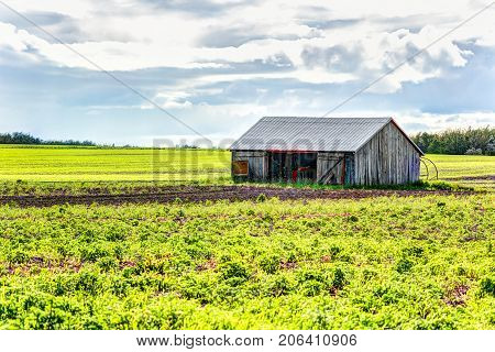 Red Painted Old Vintage Shed, Barn With Rows Of Cultivation Furrow Land Plants In Soil During Summer