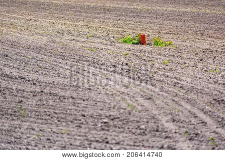 Quebec Farm Landscape With Brown Plowed Field Furrows In Summer With Red Light In Canada