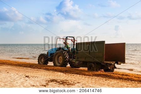 Tractor cleaning the beach from seaweed. Dominican Republic Atlantic coast