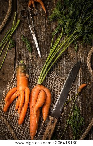 Unusual carrots on an old wooden table. Top view carrot concept.