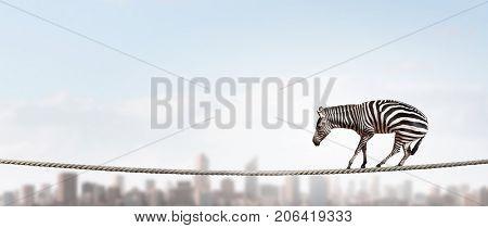 Zebra balancing on rope. Mixed media