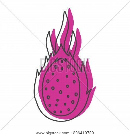 Dragon fruit in doodle style icons vector illustration for design and web isolated on white background. Dragon fruit vector object for labels and logo