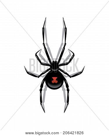 Black spider isolated on white background. Vector halloween object.
