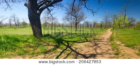 footpath to the sea through the spring Park with fruit trees